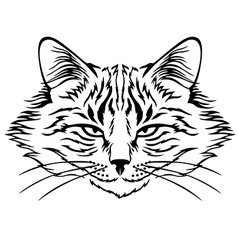 harmful cat vector image