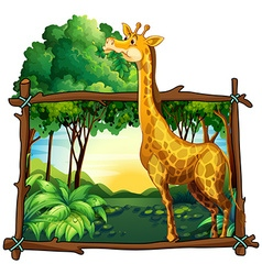 Giraffe eating leaves on the tree vector image vector image