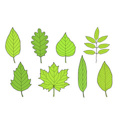 Hand drawn set of green leaves vector