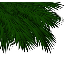 Christmas background with spruce branches vector image vector image