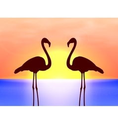 Silhouette couple flamingos in the sunset vector