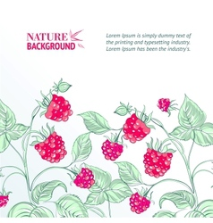 Raspberry watercolor vector image vector image
