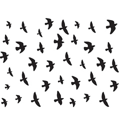 Flying birds isolated on white vector