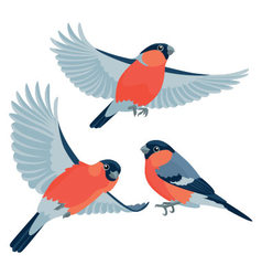 Bullfinches on white background vector image vector image