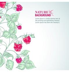 Raspberry watercolor vector