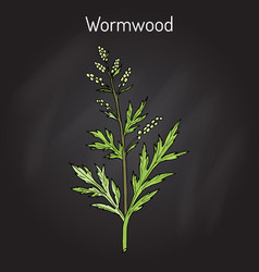 mugwort or common wormwood artemisia vulgaris vector image