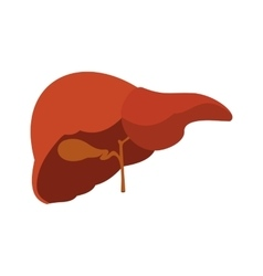 Human liver icon vector