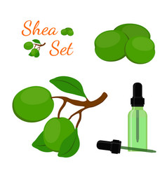 shea nut oil in bottlecartoon flat style vector image