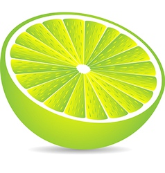 Half lime isolated on white vector