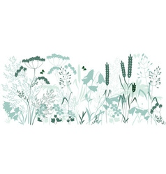 HERBAL vector image vector image