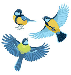 Titmouse on white background vector image vector image