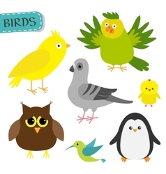 Bird set colibri canary parrot dove pigeon vector