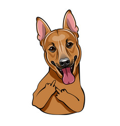 brown cute dog with middle finger vector image vector image