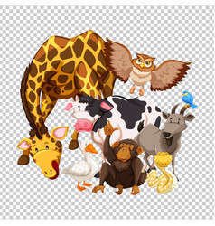 Many wild animals on transparent background vector