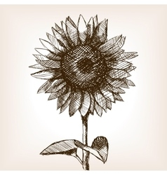 Sunflower hand drawn sketch style vector image vector image