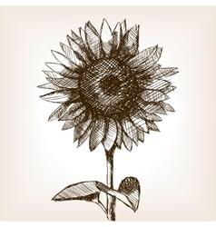Sunflower hand drawn sketch style vector