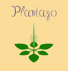 Flat on background plant plantago vector