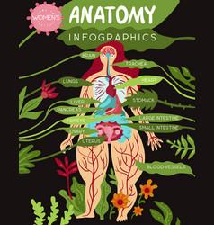 Women organs anatomy infographics vector