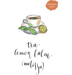 cup of herbal lemon balm tisane or tea with fresh vector image