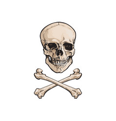 Cartoon skull and cross bones isolated vector