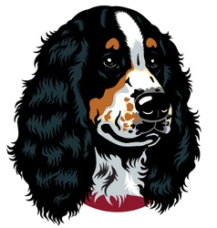 English cocker spaniel head vector