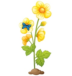 A plant with yellow flowers vector image vector image