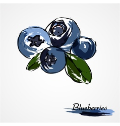 Blueberries huckleberries vector