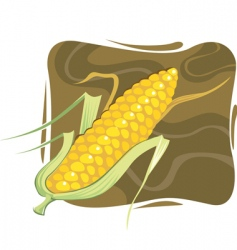 maize vector image vector image