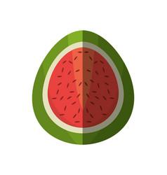 half watermelon fruit shadow vector image