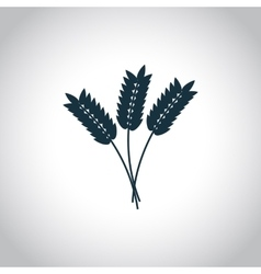 Wheat ears flat icon vector