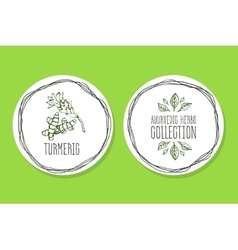Ayurvedic herb - product label with turmeric vector