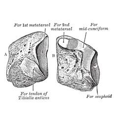 Cuneiform vintage vector
