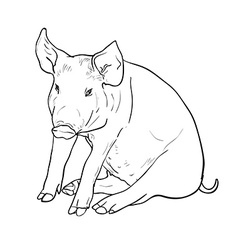 Drawing of pig vector image vector image