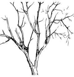 ink drawing tree vector image