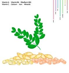 Moringa leaves with vitamin a b6 b2 and c vector