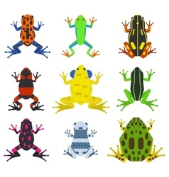Frog cartoon tropical animals and green nature vector