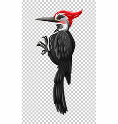 Black woodpecker on transparent background vector