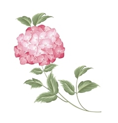 Single hortensia flower vector image