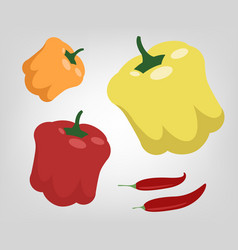 flat peppers vector image