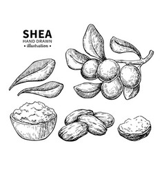 Shea butter drawing isolated vintage vector