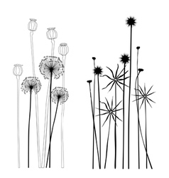 Collection wild plant poppies dandelion vector