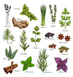 isolated icons of natural spices and herbs vector image vector image