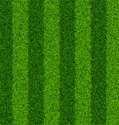 seamless green grass field vector image