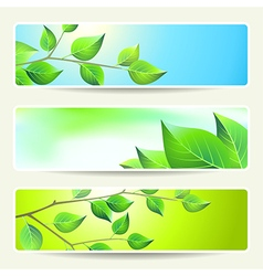 Leaves banners empty spring vector
