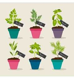 Herb garden with pots of herbs vector