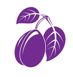 Single purple simple plum with leaves ripe sweet vector