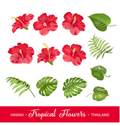 Set of tropical flowers elements vector