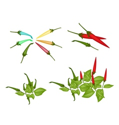 Set of red and green chili peppers vector