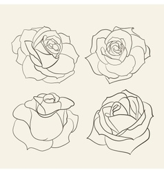 Set of roses vector image