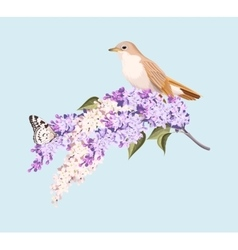 Bird and branch of lilac vector